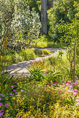 Photograph - Garden Path by Kate Brown