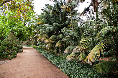 Photograph - Garden Path by Roger Mullenhour