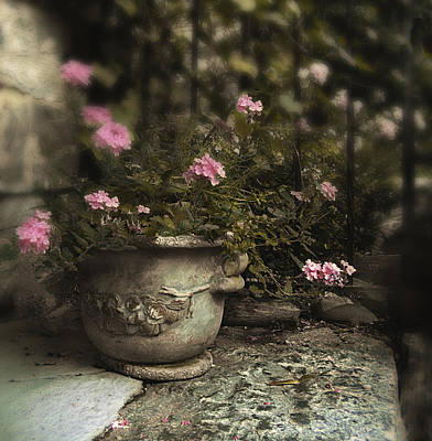 Planter Wall Art - Photograph - Garden Planter by Jessica Jenney