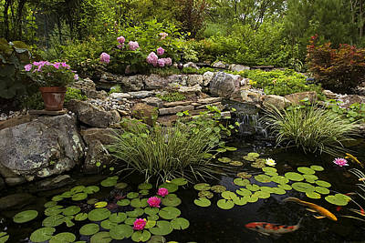 Photograph - Garden Pond - D001133 by Daniel Dempster