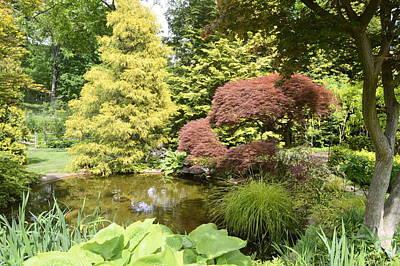 Photograph - Garden Pond by Judith Morris