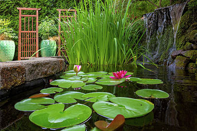Photograph - Garden Pond With Plants And Waterfall by Jit Lim