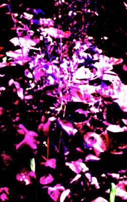 Photograph - Garden Purple by David Trotter
