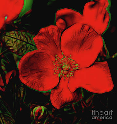 Photograph - Garden Rose 11518 by Ray Shrewsberry
