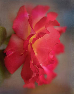 Photograph - Garden Rose 8970 by Teresa Wilson