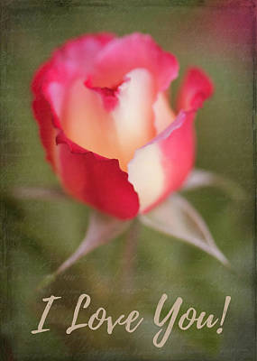 Photograph - Garden Rose - I Love You by Teresa Wilson