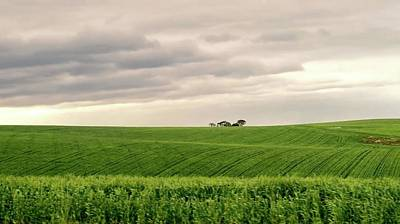 Photograph - Garden Route In Green by Jennifer Wheatley Wolf