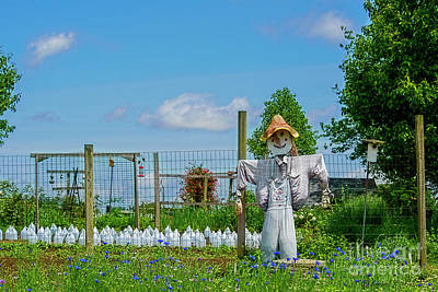 Photograph - Garden Scarecrow by David Arment