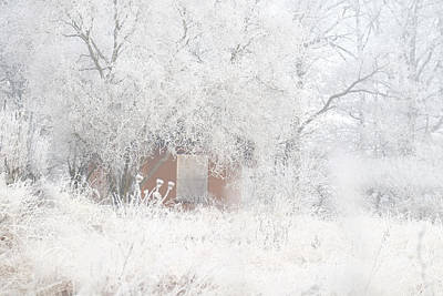 Photograph - Garden Shack Under Trees And Shrubs In Hoar Frost by Martin Stankewitz