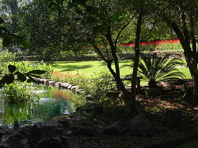 Photograph - Garden Silouhette by Anne Cameron Cutri