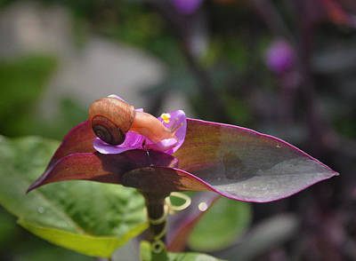 Photograph - Garden Snails Wandering by Kate Word