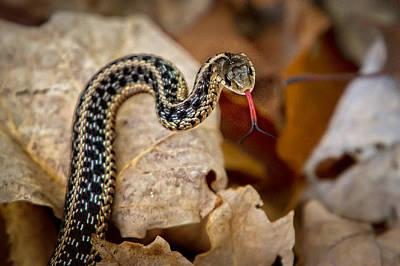 Garden Snake Art Print by Eleanor Abramson