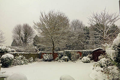Photograph - Garden Snow by Tony Murtagh