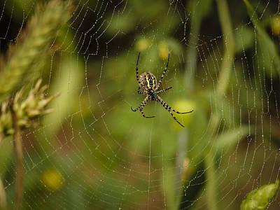 Photograph - Garden Spider by Jean Noren