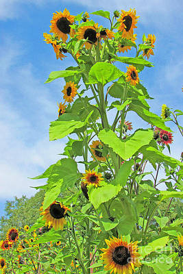 Photograph - Garden Splendor by Joyce Creswell