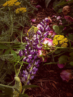 Mellow Yellow - Garden still life by Gene Camarco