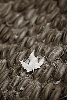 Photograph - Garden Stones 3 by Marilyn Hunt