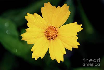 Photograph - Garden Sun by Karen Adams