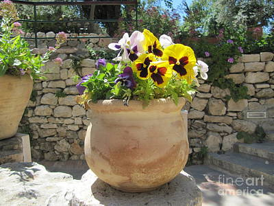 Photograph - Garden Tomb Pansies by Donna L Munro