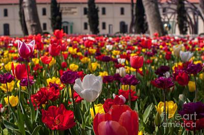 Botanic Photograph - Garden by Ugur Ugurlu