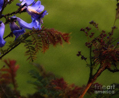 Photograph - Garden View by Linda Shafer