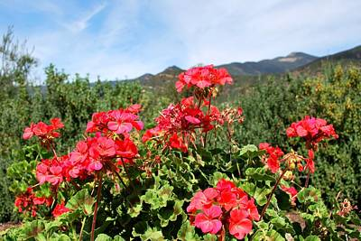 Photograph - Garden View Mountain Landscape by Matt Harang