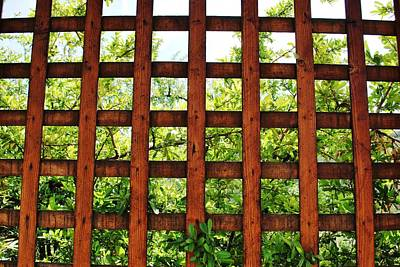 Photograph - Garden View Through Trellis by Matt Harang