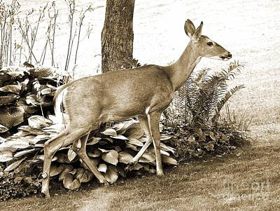 Art Print featuring the photograph Garden Visitor by Betsy Zimmerli