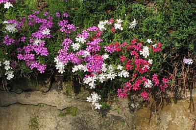 Photograph - Garden Wall by Ann Bridges