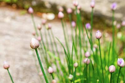 Photograph - Garden Wildflower Bulbs by Steven Green