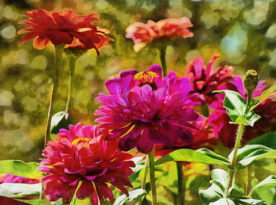 Digital Art - Garden Zinnias by JGracey Stinson