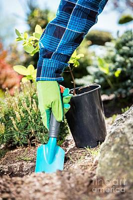 Gardener Digging With A Shovel. Art Print