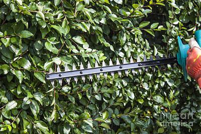 Gardener Trimming Bushes Art Print by D R