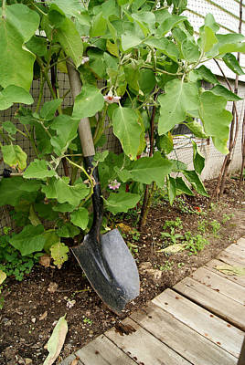 Photograph - Gardener's Shovel by Margie Avellino