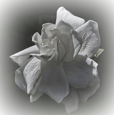 Photograph - Gardenia Blossom In Bw by HH Photography of Florida
