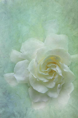 Photograph - Gardenia by Catherine Alfidi