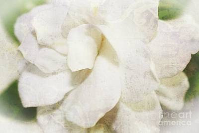 Photograph - Gardenia by Ella Kaye Dickey