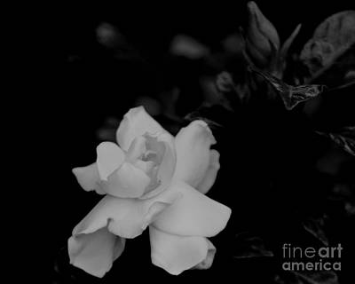 Photograph - Gardenia In Bw by IK Hadinger