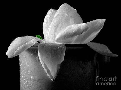 Gardenia Photograph - Gardenia In Coffee Cup by Silvia Ganora