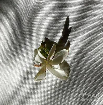 Photograph - Gardenia On Tablecloths  by Suzanne Lorenz
