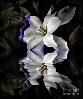 Photograph - Gardenia by Patti Schulze
