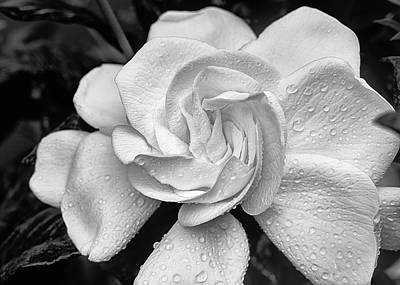 Photograph - Gardenia The Scent Of The South by JC Findley