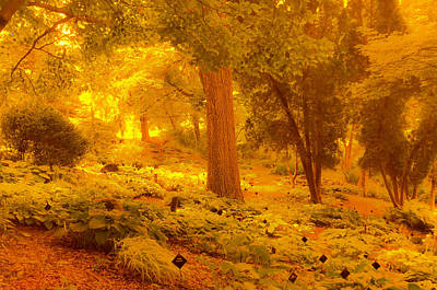 Photograph - Gardens Of Gold by Randy J Heath