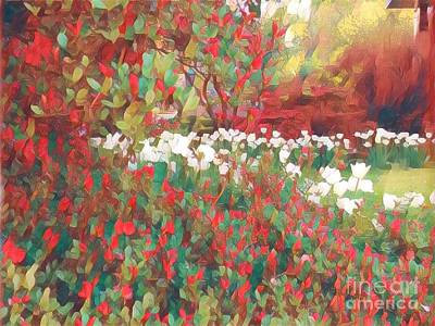 Photograph - Gardens Of Spring - Tulips In Red And White by Miriam Danar