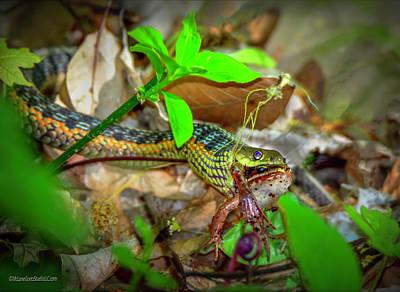 Photograph - Gardner Snake And Wood Frog by LeeAnn McLaneGoetz McLaneGoetzStudioLLCcom