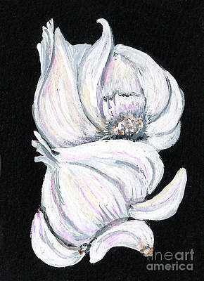 Garlic 2 Art Print by Elaine Hodges