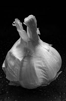Lilies Royalty-Free and Rights-Managed Images - Garlic Bulb B W by Steve Gadomski