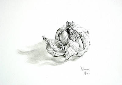Drawing - Garlic Bulb by Rebecca Giles