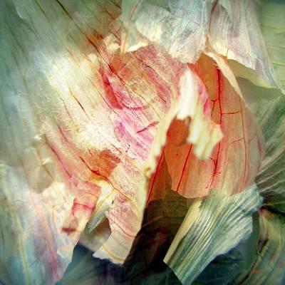 Photograph - Garlic Peel Celebrated by VIVA Anderson