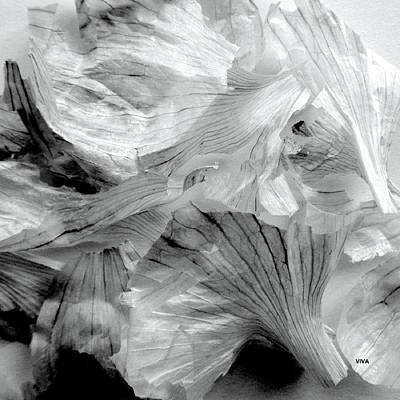 Photograph - Garlic Series - B  -  W by VIVA Anderson